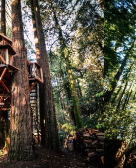 California: Santa Cruz, Treehouse