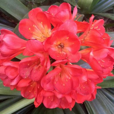 Flower; by Kathy Leonardo; courtesy of ETG