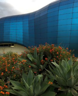 Long Beach: Pacific Visions, The Aquarium of the Pacific