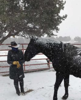 Artist Helen K. Garber Rekindles Her Love Of Horses