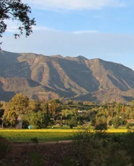 A Day of Renewal in Ojai